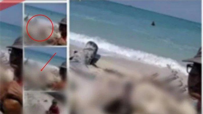 Heboh Potret Jenazah Awak KRI Nanggala-402 Terdampar di Pantai, Hasil Otopsi Keluar, Cek Fakta