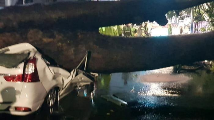 Mobil Xenia Ringsek Tertimpa Pohon Berumur 40 Tahun yang Tumbang, Begini Nasib Pemilik Kendaraan
