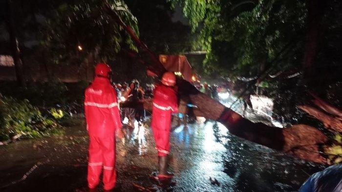 Jakarta Hari Ini, Ada 2 Pohon Tumbang di Cengkareng dan Kalideres