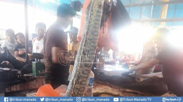 Di Pasar Tomohon Ada Ular Piton yang Tersedia 7-11 Meter