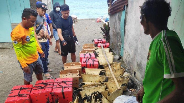 BREAKING NEWS Ditpolairud Polda Sulut Gagalkan Penyeludupan 59 Ekor Ayam dari Filipina