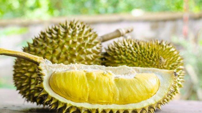 Manfaat Buah Durian untuk Kesehatan Namun Tidak Boleh Berlebihan Dikonsumsi, Ini Efek Sampingnya