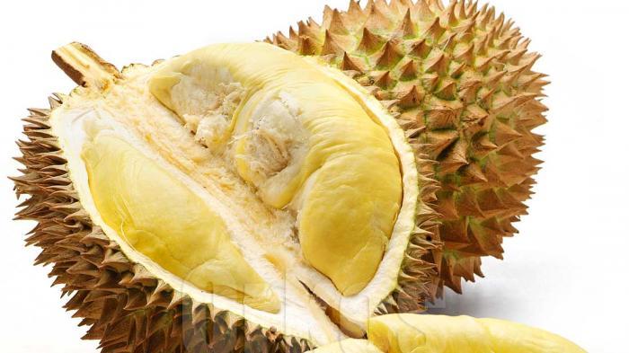 Jangan Sekali-kali Padukan Durian dengan Minuman atau Makanan Ini, Bisa Mematikan