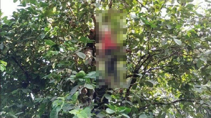 Tepergok Ibunya di Kamar Bersama Laki-laki, Gadis Remaja  Akhiri Hidup di Pohon Jambu