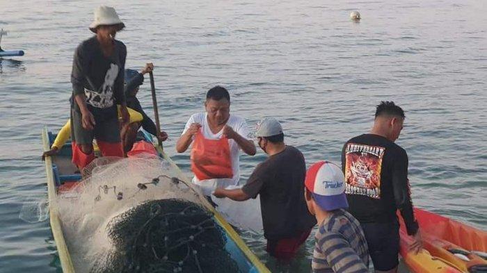 Gubernur Olly Dondokambey Terjun ke Laut, Beli Ikan Segar Hasil Tangkapan Nelayan