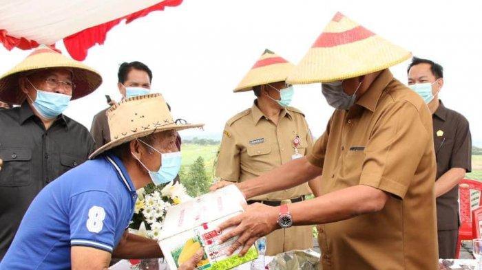 OD Serahkan Bantuan Bibit dan Pupuk untuk Puluhan Petani Jagung di Perkebunan Wawo