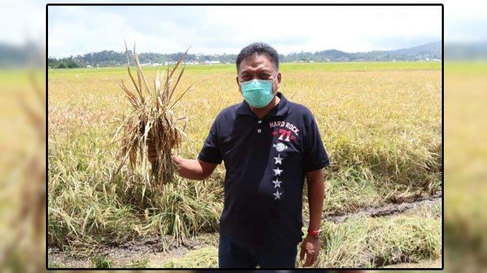 Olly Dondokambey Sabet Penghargaan Kementan RI, Sektor Pertanian Tumbuh di Masa Pandemi