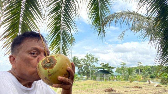 Gubernur Sulut, Olly Dondokambey minum kelapa yang ditanamnya di kebunnya Desa Kolongan, Kabupaten Minahasa Utara, Provinsi Sulut.
