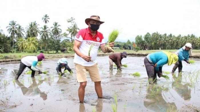 Gubernur Sulut Olly Dondokambey Andalkan Sektor Pertanian, NTP Sulut Naik Lagi Pada Agustus 2021