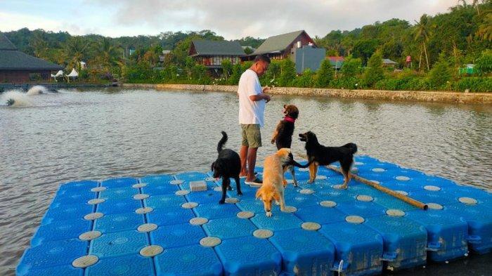Aktivitas Pagi Hari Gubernur Olly Dondokambey, Ajak Main Anjing Peliharaan Keliling Telaga