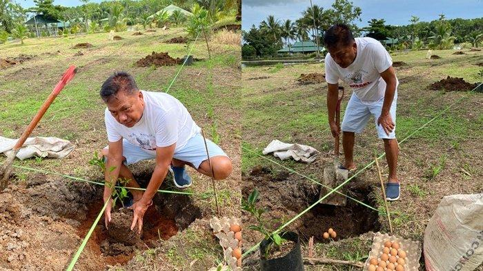 Gubernur Sulut, Olly Dondokambey menanam jeruk bali di kebunnya Desa Kolongan, Kabupaten Minahasa Utara, Provinsi Sulut.