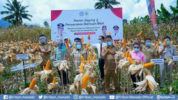 Gubernur Sulut Olly Dondokambey Tanam Jagung di Kebun Kobo Besar Sekaligus Ajak Masyarakat Berkebun