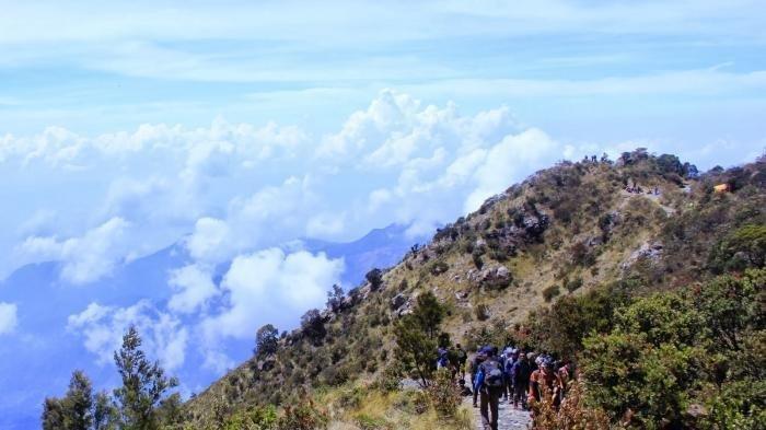 Fakta Burung Keramat Jalak Lawu yang Selamatkan Pendaki yang Tersesat di Gunung Lawu