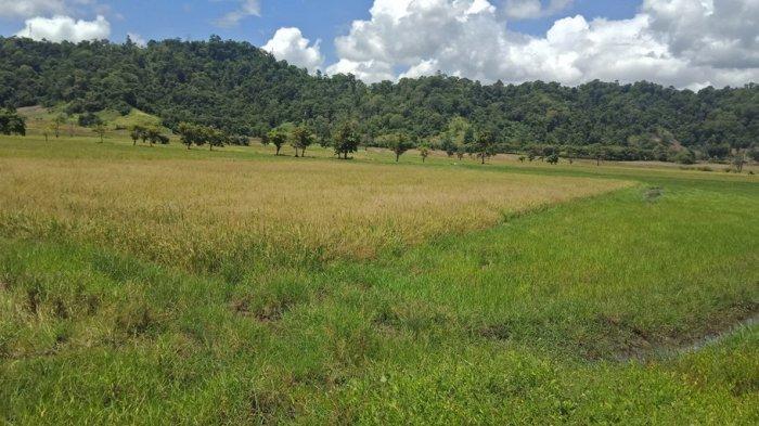 Penanaman Modal dan PTSP Bolmong Siapkan Peta Kawasan Potensi Agroindustri