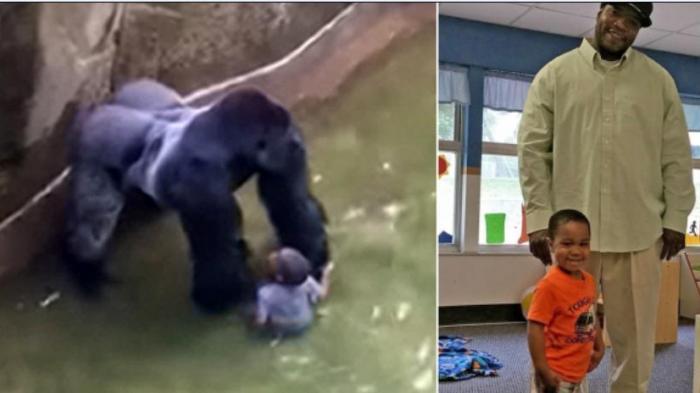 Polisi Selidiki Keluarga Bocah yang Jatuh di Kandang Gorila