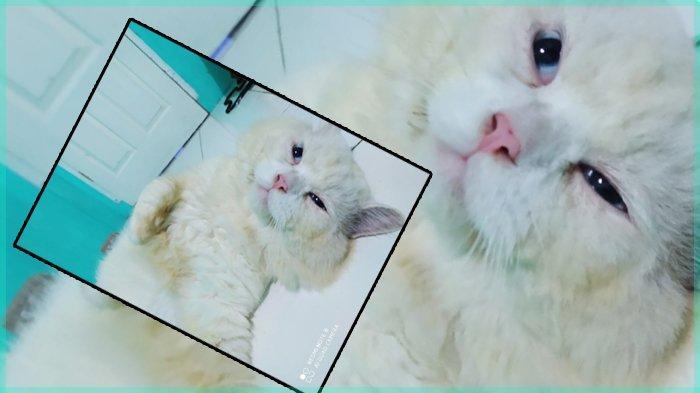 Tanda Kucing Sayang kepada Kita, Salah Satunya Memperlihatkan Perut