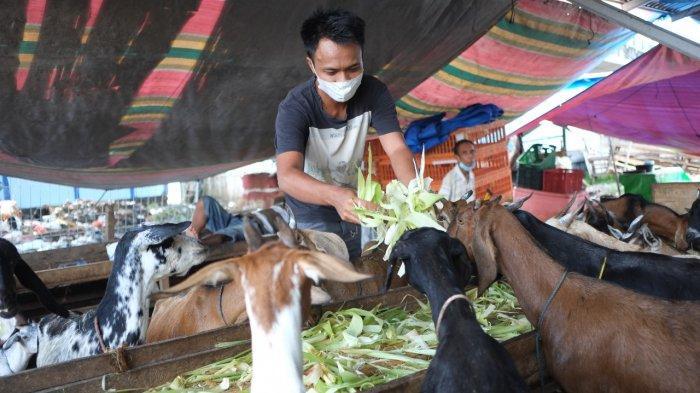 Jelang Idul Adha, Penjualan Hewan Kurban Stabil di Manado