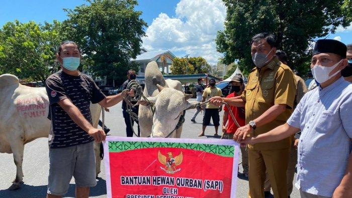 Olly Dondokambey Serahkan 30 Ekor Sapi Kurban, Seekor Paling Besar Bantuan Jokowi