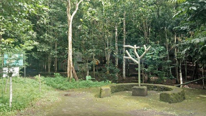 Menengok Hutan Kenangan di Minahasa Utara, Saksi dari Kisah Mesra Jokowi - Iriana