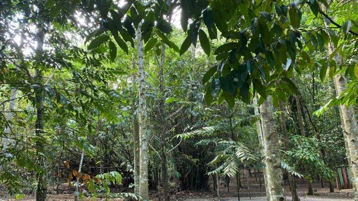 Jokowi dan Puluhan Pejabat se Indonesia Pernah Tanam Pohon di Hutan Kenangan Minut