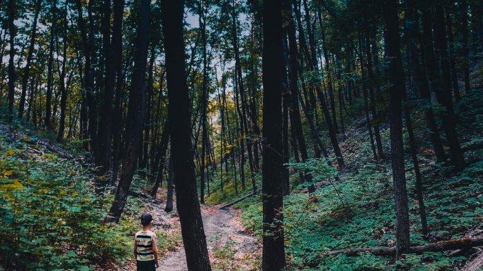 ILUSTRASI tersesat di hutan