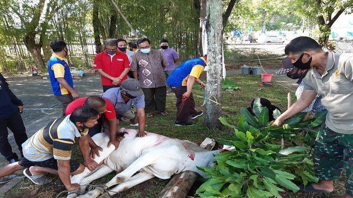 IAIN Manado Melaksanakan Ibadah Penyembelihan Hewan Kurban pada Momentum Idul Adha