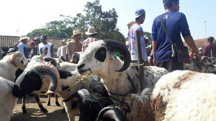 idul-adha-harga-hewan-ternak-domba-sapi.jpg