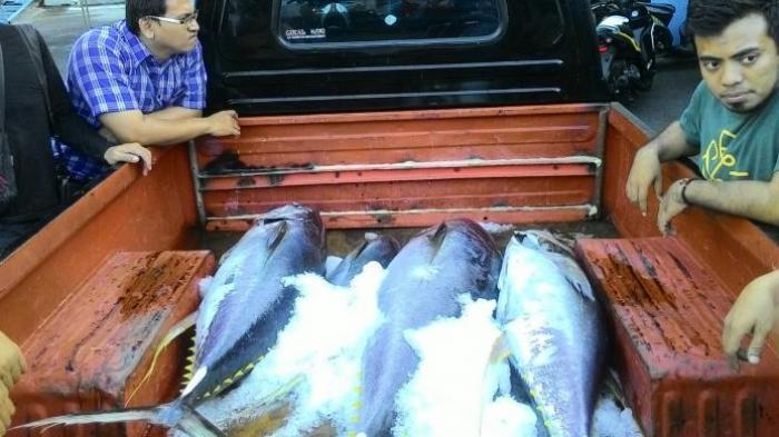 Ekspor Tuna Sulut Tembus 500 Juta Dolar, Makin Gairahkan Sektor Perdagangan