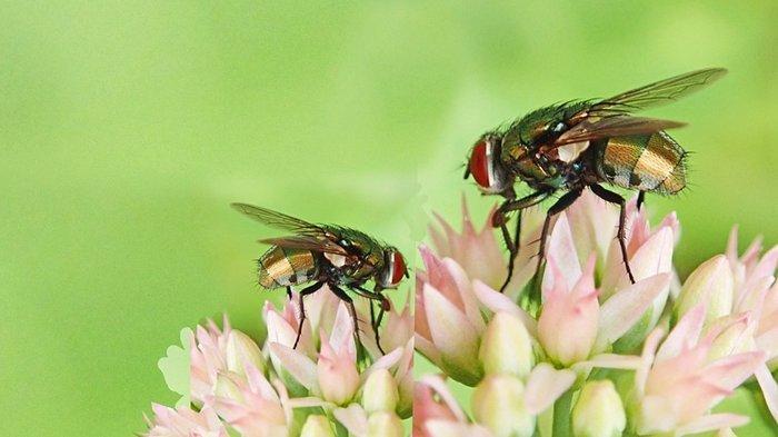Arti Mimpi Tentang Lalat, Pertanda Adanya Masalah hingga Datangnya Rasa Gugup, Ini Tafsirannya