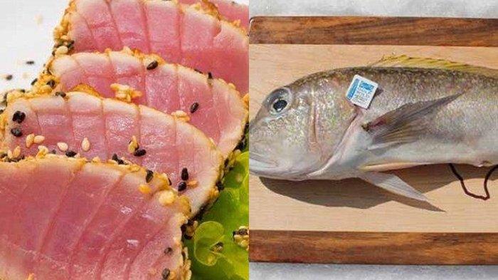 12 Ikan yang Tidak Disarankan untuk Dikonsumsi, Begini Penjelasannya