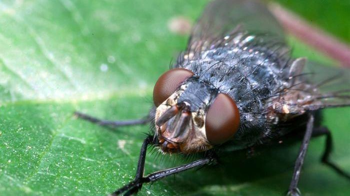 Apa Arti Mimpi Lalat? Berikut Ini Tafsiran Lengkapnya