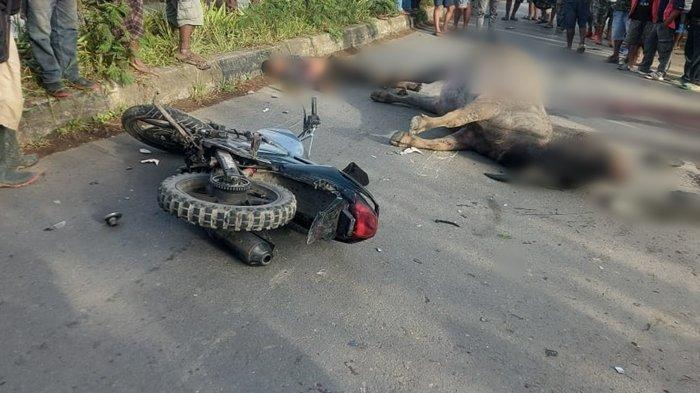 Kecelakaan Maut Tadi Pukul 07.30 WIB, Seorang Pemotor Tewas Usai Menabrak Kerbau yang Menyebrang