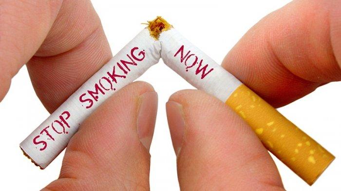 Nikotin Tak Berbahaya, Begini Hasil Penelitian YPKP Indonesia - Tribun  Manado