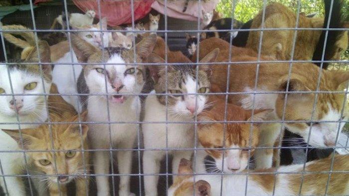 Muncul Petisi untuk Gubernur Sulut, Stop Siksa Kucing di Pasar Ekstrem Tomohon, Ada Peringatan WHO