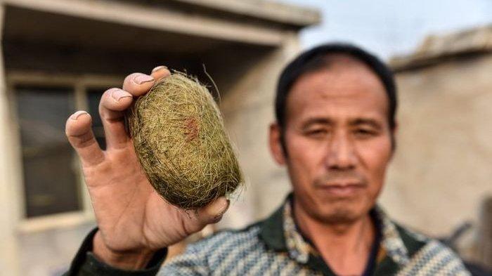 Pria Ini Temukan Batu Empedu Babi, Ia Kaget Saat Tahu Harganya, Mendadak Jadi Miliarder