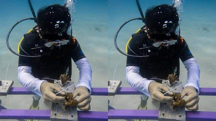 Bupati Minut Joune Ganda Perkenalkan Surga Bawah Laut Likupang: Ikan Orange dan 'Kota Spongebob'
