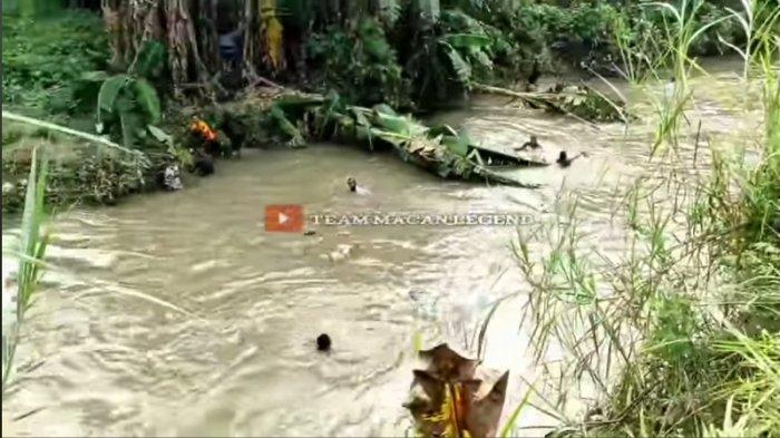 Viral di Facebook Tim Macan Polresta Manado Bubarkan Judi Sabung Ayam, Para Pelaku Jebur ke Sungai