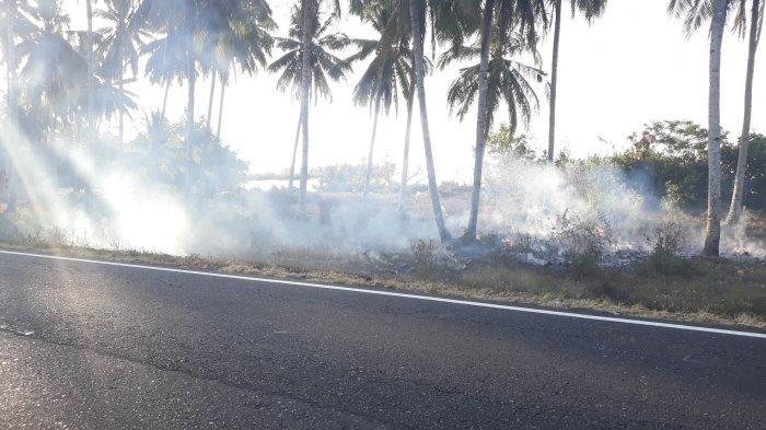 Breaking News - Kebakaran Lahan di Jalan Trans Sulawesi Ganggu Pengendara