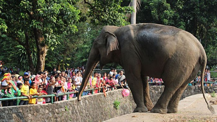 Arti Mimpi Kebun Binatang, Bisa Jadi Anda Merasa Kurang Bebas, Ini Tafsiran Lengkapnya