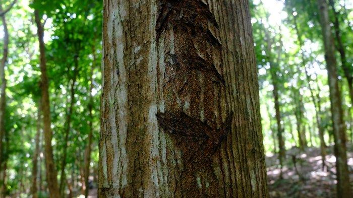 carvings on a tree trunk