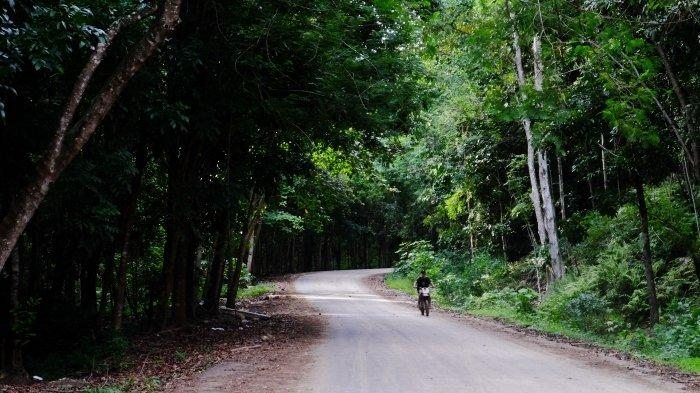 person riding a bike on a dirt road cutting through the forest