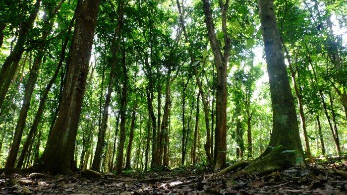 view of the forest in Indonesia