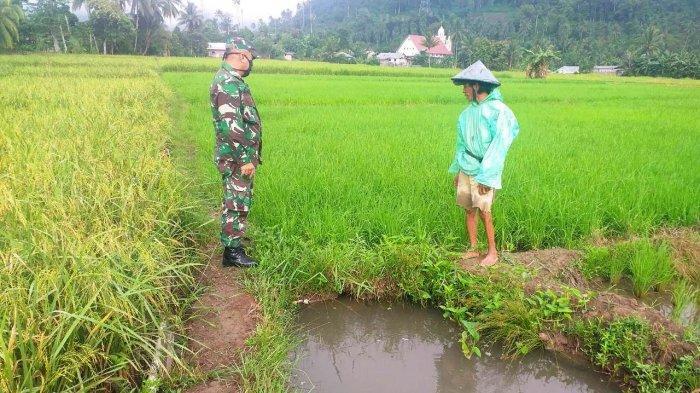 Gelar Komunikasi Sosial Lolayan, Begini Sosok Babinsa di Mata Petani Desa Mopait
