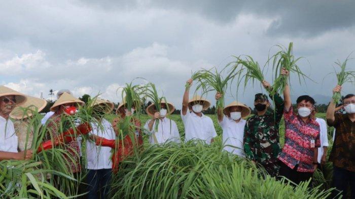 Dorong Ekonomi Daerah, BSG Kucur KUR Bohusami Bakobong ke Klaster Petani Sereh Wangi Minahasa