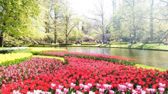 Warna-warni Musim Semi di Keukenhof Belanda, Tujuh Juta Bunga Mekar Berbarengan