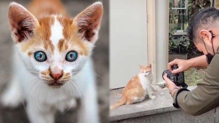 Kisah Revy Hervyan, Pemuda yang Hobi Memotret dan Beri Makan Kucing Jalanan: 'Dapat Momen Itu Susah'