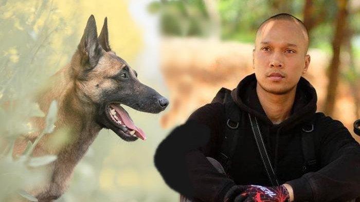 Pengakuan Bima Aryo Terkait Tewasnya Art Yang Diserang Oleh Anjing Berjenis Malinois Belgian Halaman All Tribun Manado