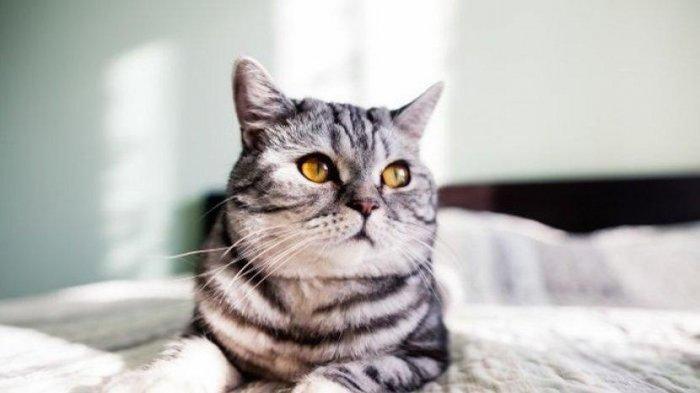 Benarkah Kucing Bisa Melihat di Dalam Gelap dan Benarkah Kucing Bisa Melihat Warna?