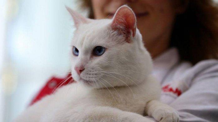 Kucing Acchiles Siap Ramal Pertandingan Euro 2020, Pernah Ramal 4 Pertandingan Piala Dunia 2018