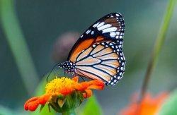 Arti Mimpi Kupu-kupu, Bisa Jadi Pertanda Kebebasan untuk Mengubah Hidup, Ini Tafsirannya